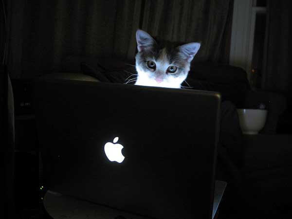 chat cat macbook - Devenir Contributeur sur MaxiApple